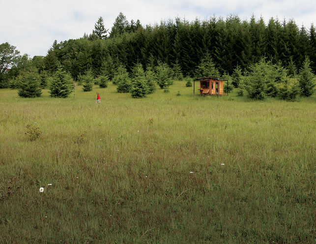 watershed-house-wren-oregon_6.jpg