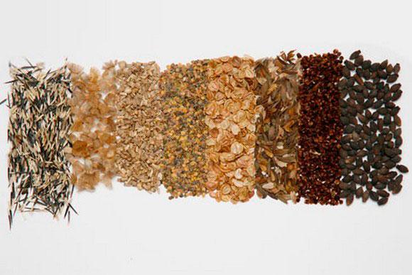 semena.jpg