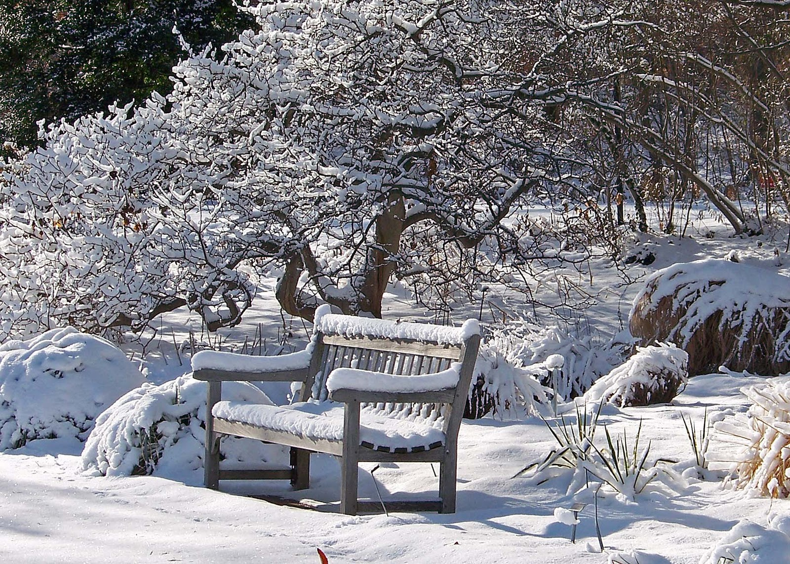 winter-bench-mid.jpg