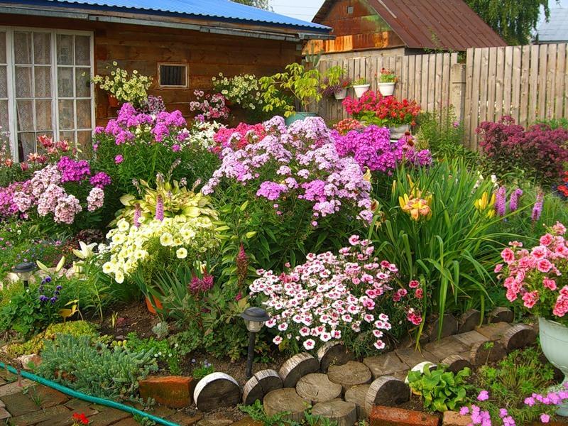 cvetnic_na_dache.jpg