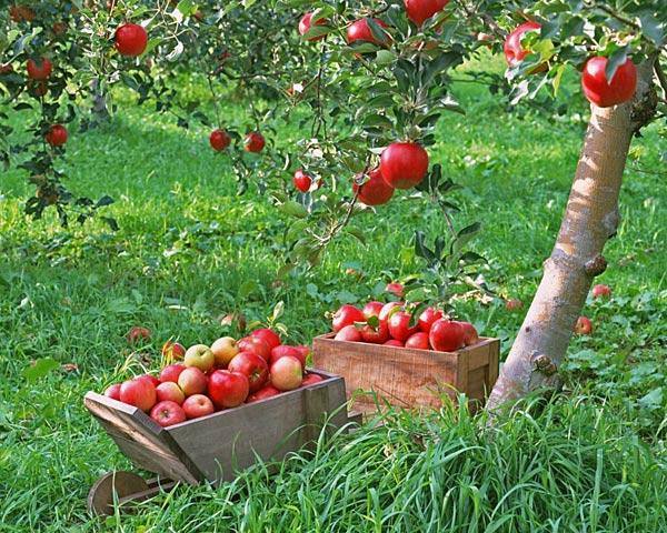 plodovie-derevya.jpg